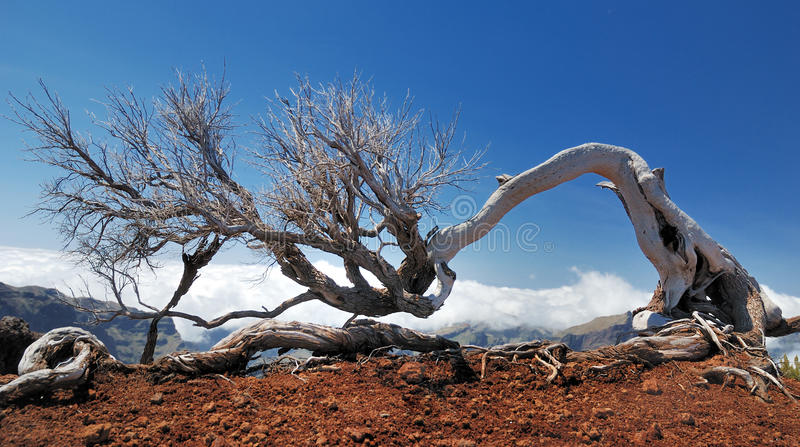 Dead tree above the clouds royalty free stock photo