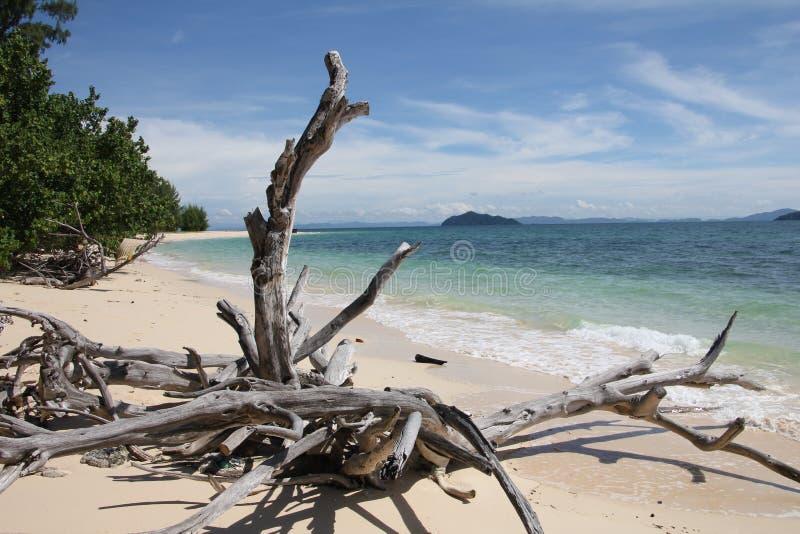Driftwood, Dead Tree At A Beach | Koh Bulon Thailand Stock Photography