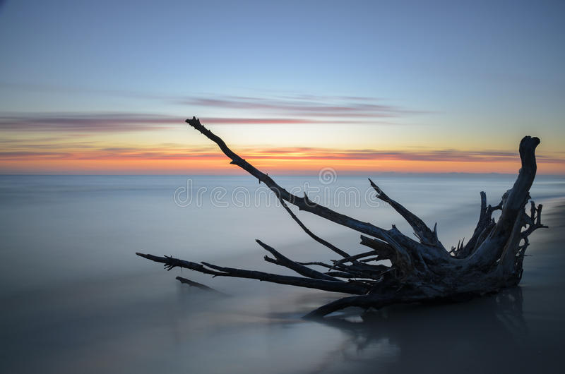 Dead tree on a beach during sunrise with blurry sea in background. stock photography