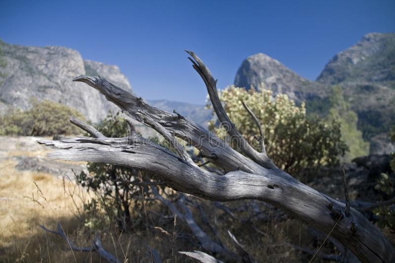 Dead tree branch on the dry grass near the Hetch Hetchy Reservouar,USA royalty free stock image