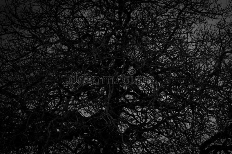 Dead tree and branch on white background. Black branches of tree. Disorganized tree branches. Tangled of life concept. Crazy. Pattern. Intertwined branch stock image