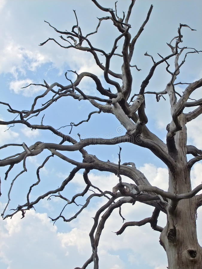 Download Dead Tree Branches stock photo. Image of dead, branches - 88488972