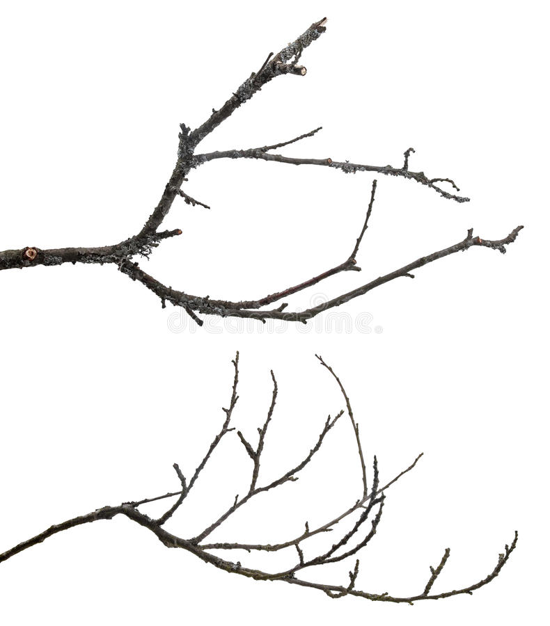 Free Dead Tree Branches Isolated On White Stock Image - 41207401