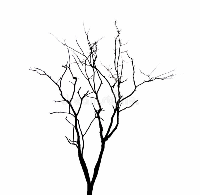 Dead Tree Branches Isolated. Stock Image - Image of white ...