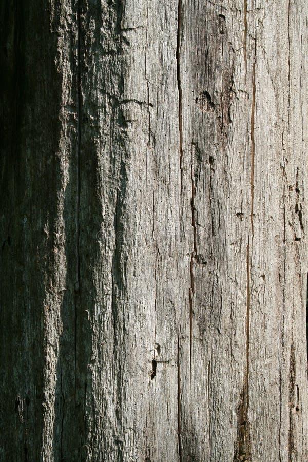 Dead Tree - Closeup Stock Photography