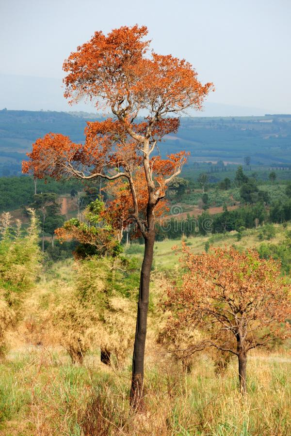 Download Dead tree stock image. Image of forest, ground, autumn - 33697931