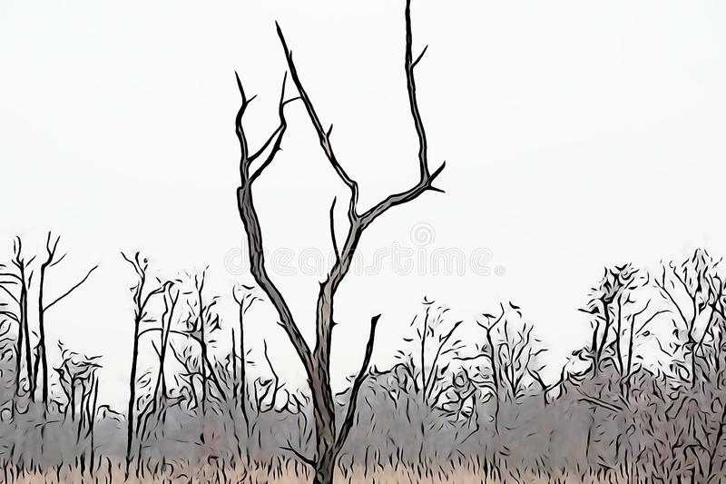 Dead tree contrasted agains light overcast sky. Illustration version simplifying form stock images