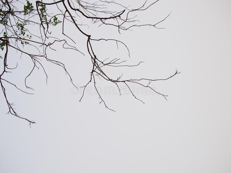 Dead tree on grey background royalty free stock images