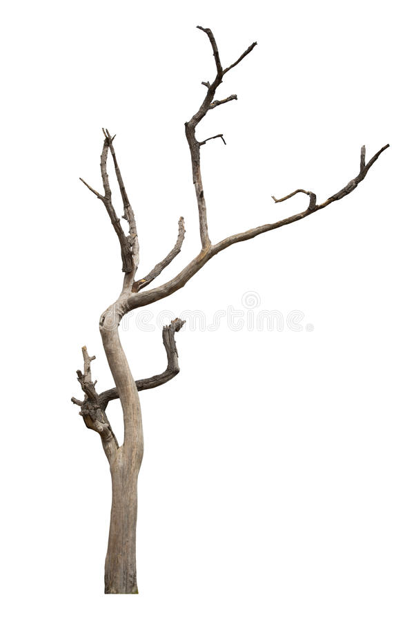 Download Dead Tree Isolated On White Stock Photo - Image: 54297968