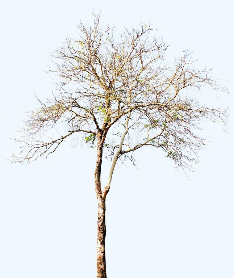 Dead tree isolated on white background royalty free illustration