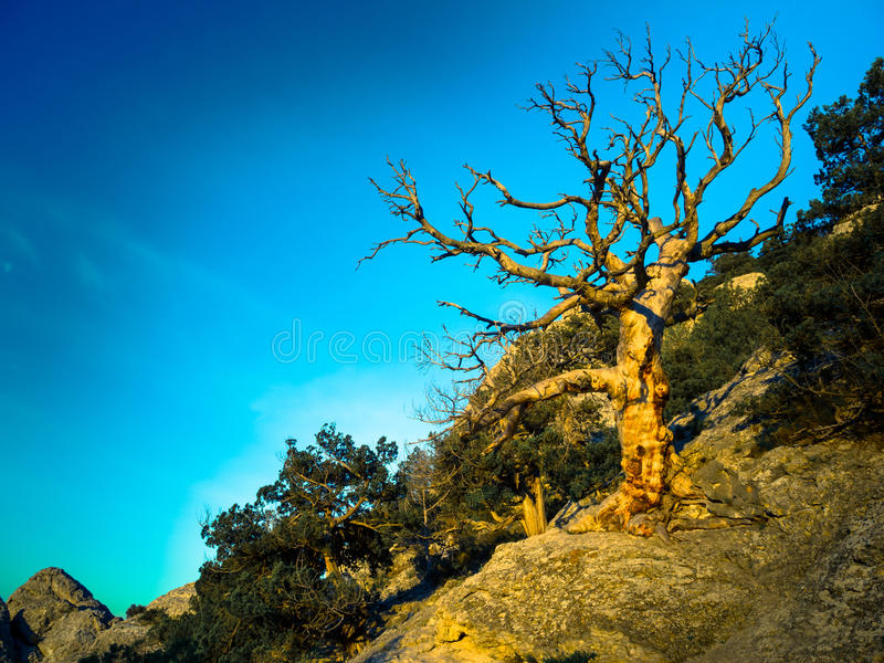 Download Dead Tree Royalty Free Stock Photos - Image: 36671188