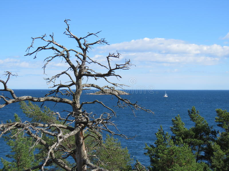 Dead tree, lone sailboat royalty free stock image