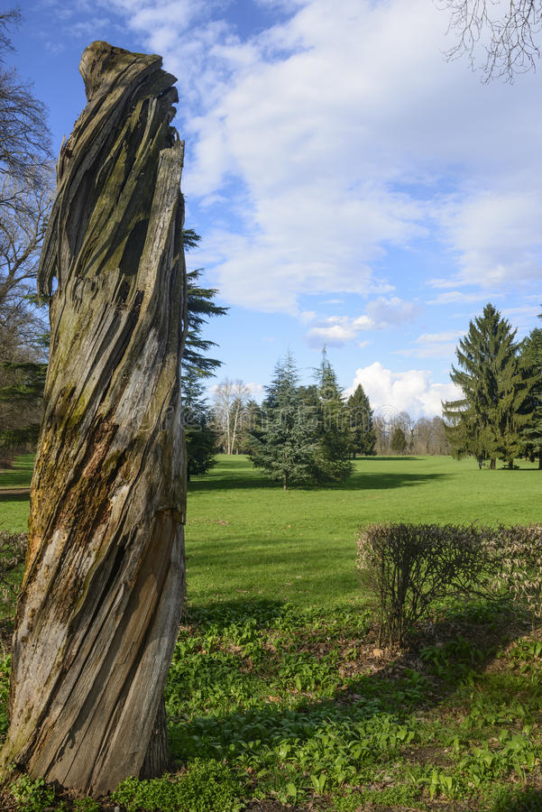 Download Dead Tree In The Monza Park Stock Photo - Image: 30143596