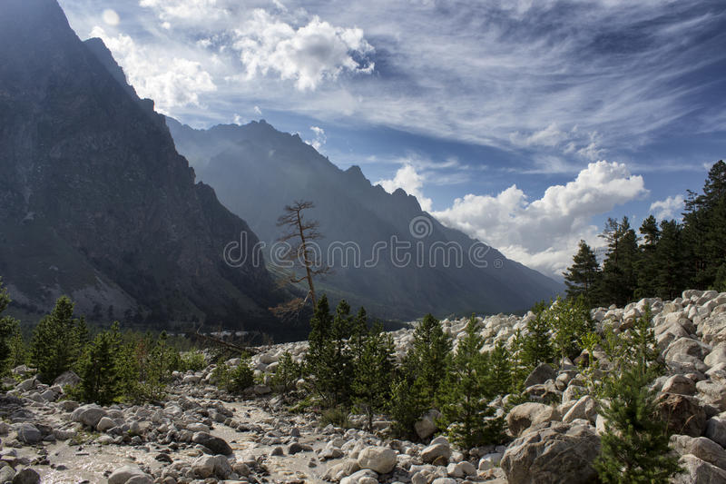 Dead tree in the mountains royalty free stock photo