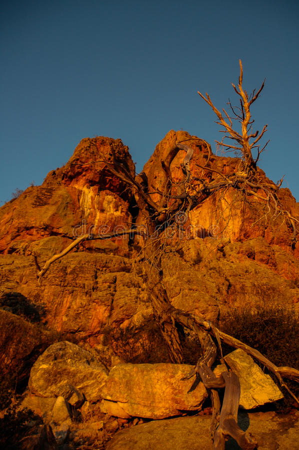Dead tree at Mt Arapiles royalty free stock image