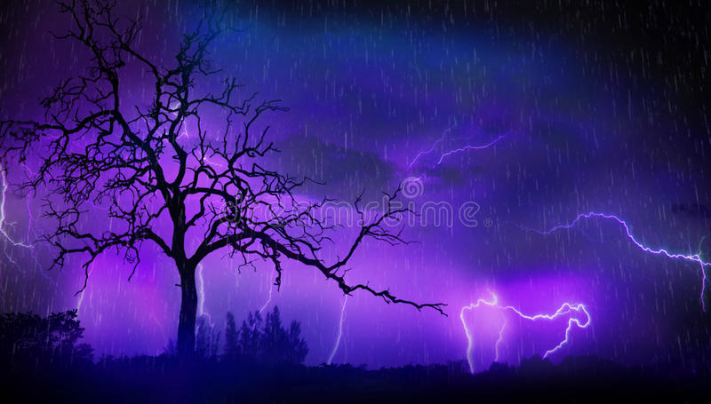 Dead tree and lightning stock image