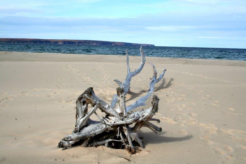 Dead tree on sand stock photos