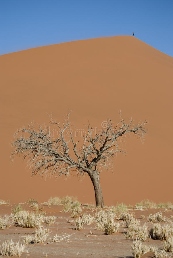 Dead tree and sand dune royalty free stock photography