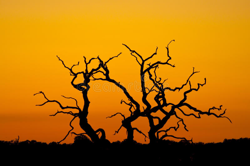 Download Tree silhouette stock image. Image of silhouette, branches - 28314791