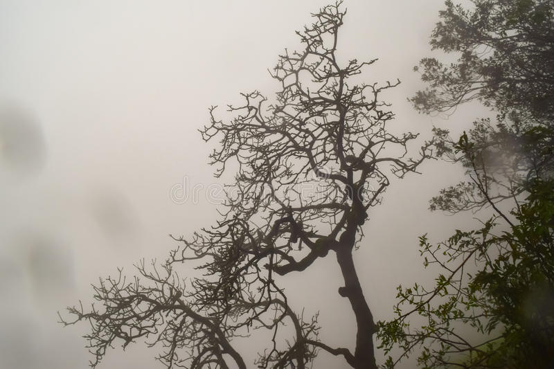 Dead tree silhouette with misty background at Matheran. Matheran hill station nestled in Sahyadri range of western ghat in Maharashtra stock photography
