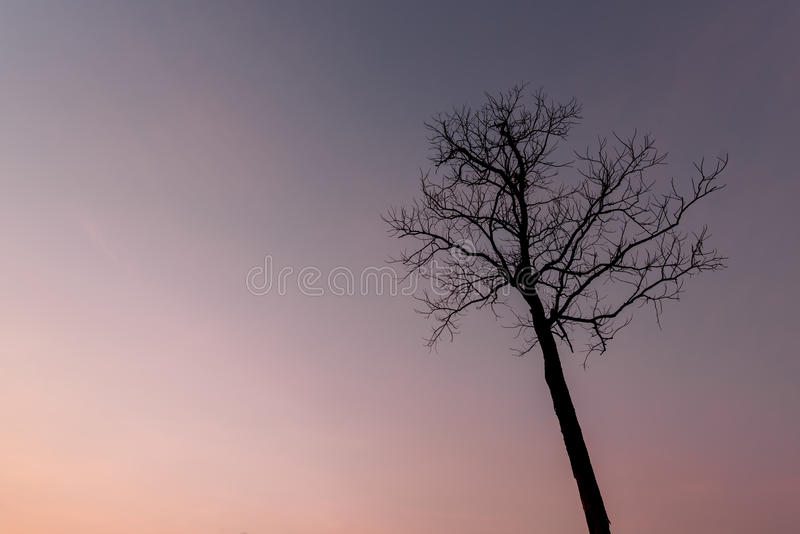 Download Dead tree stock photo. Image of beauty, tree, silhouette - 71694184