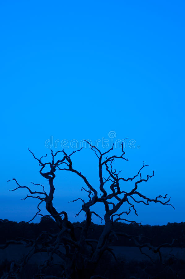 Tree Silhouette Vertical Royalty Free Stock Image