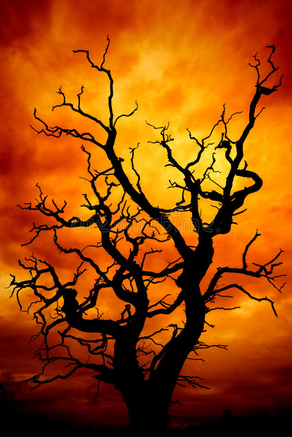 Dead tree with sky. Dead tree with a surreal scary red and orange sky for Halloween or any other spooky project stock photography