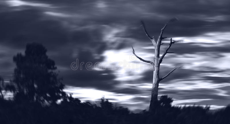 Dead Tree in Storm royalty free stock images