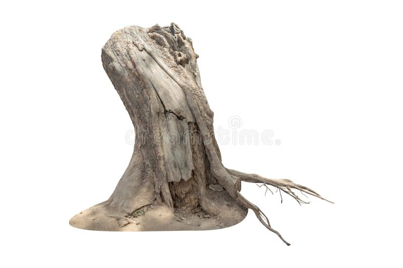 Dead tree stump isolated on white background with clipping path included stock photo