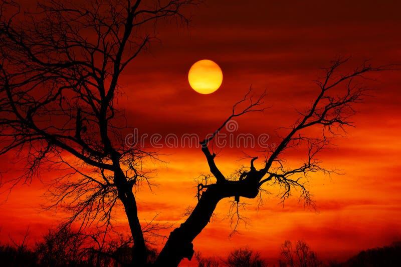 Dead tree sunset stock photo