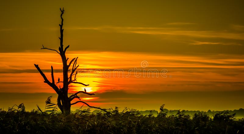 Dead tree in the sunset royalty free stock images