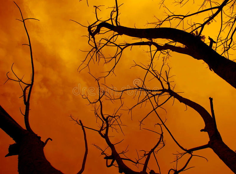 dead tree with a surreal scary red sky for Halloween royalty free stock image