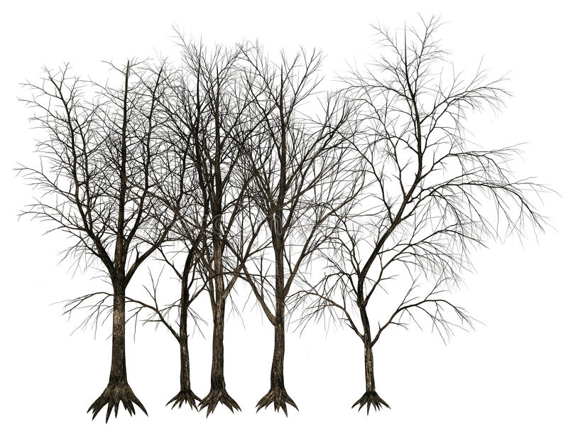 Dead Tree, Trees Illustration Isolated. Old dead tree or trees illustration. isolated on white. PNG file is available for additional format royalty free illustration