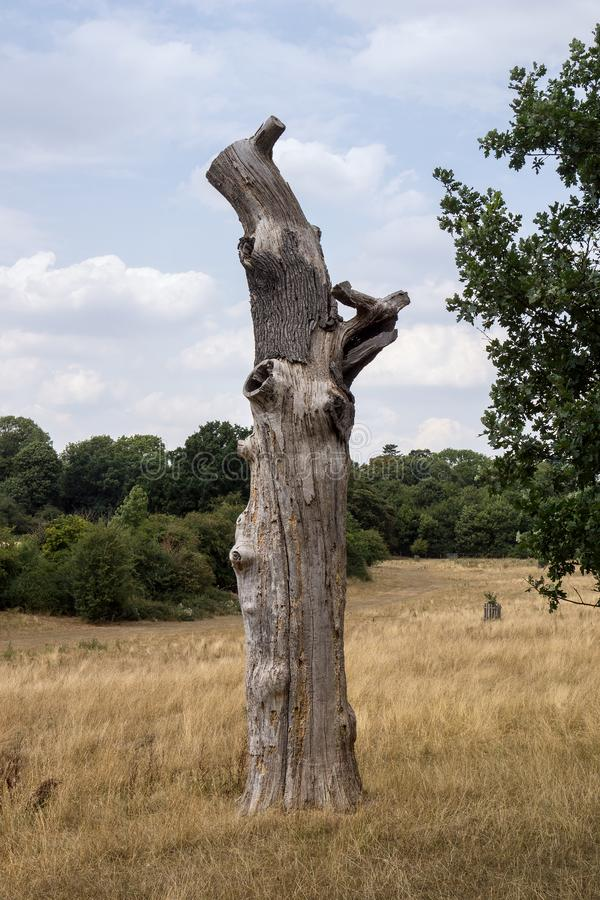 A dead and reduced tree trunk stock photo