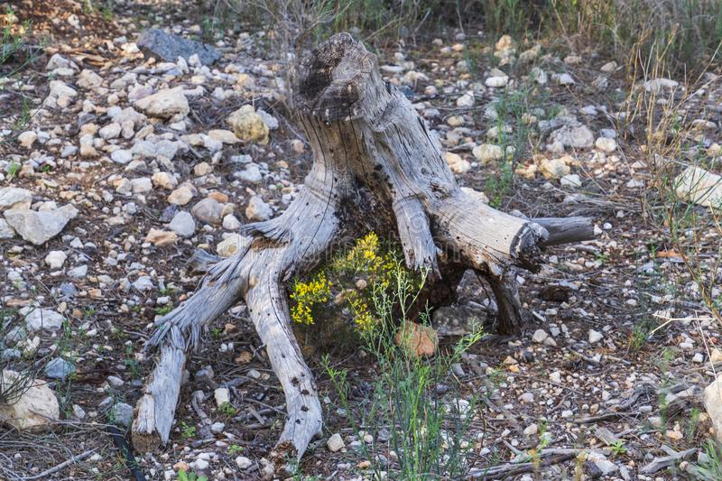 Dead tree trunk and wild flowers. Stony ground. Dry wood stock photos