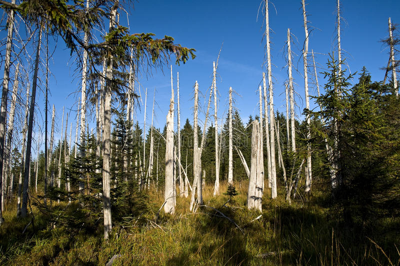 Download Dead trees stock image. Image of lonely, dead, loneliness - 11023655