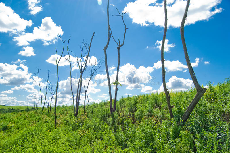 Download Dead Trees stock photo. Image of outdoor, industry, country - 11894378