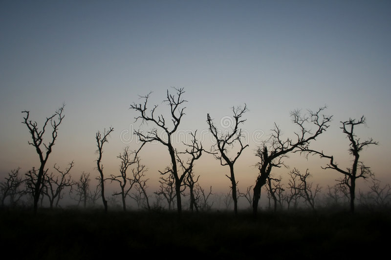 Download Dead Trees stock image. Image of calm, grass, spooky, death - 1419615