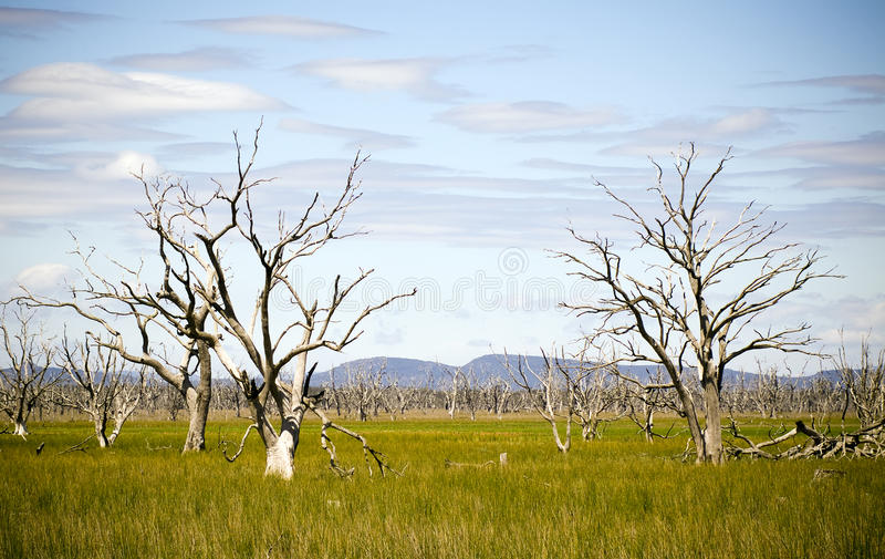 Dead Trees. Litter what once was a large lake stock image