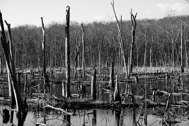 Dead Trees royalty free stock photography