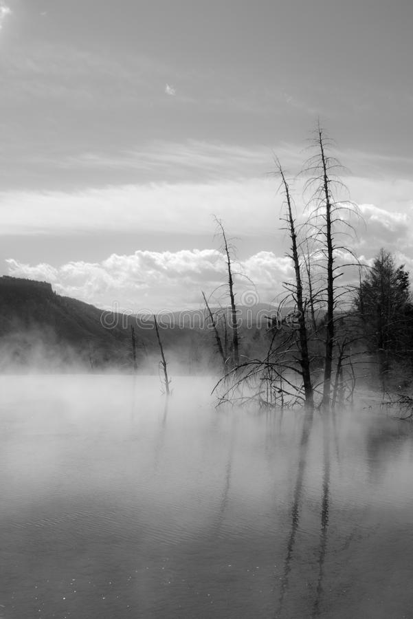 Free Dead Trees At Mammoth Hot Springs, Yellowstone Royalty Free Stock Photo - 20115695