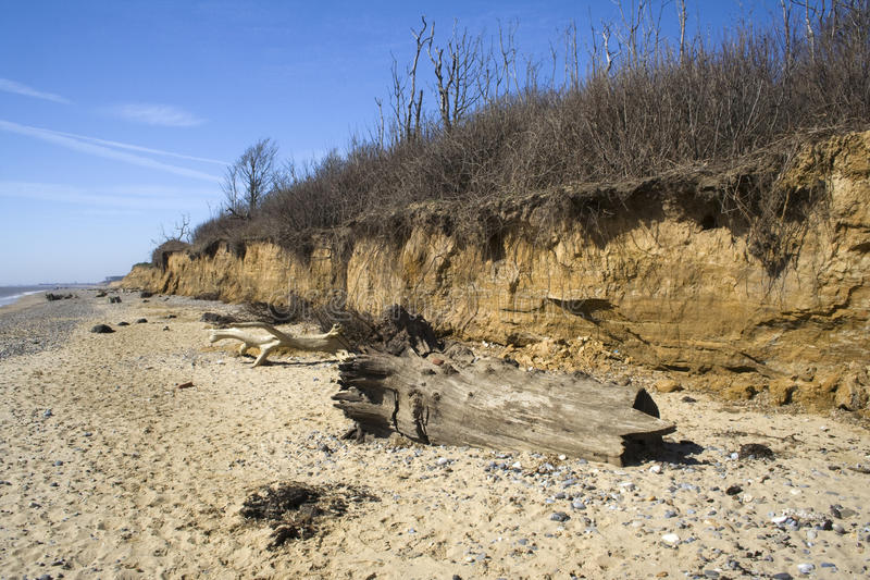 Dead trees on Benacre Beach, Suffolk, England royalty free stock photography