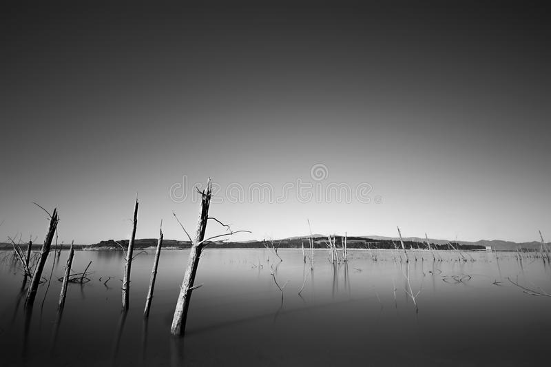 Dead trees in a dam royalty free stock image