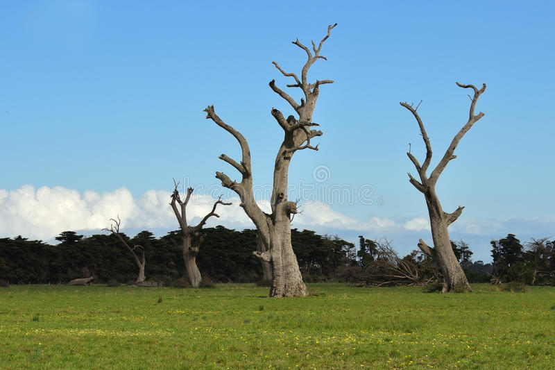 Dead trees and dandelions. Row of giant dead trees and bright dandelions on green grass royalty free stock image