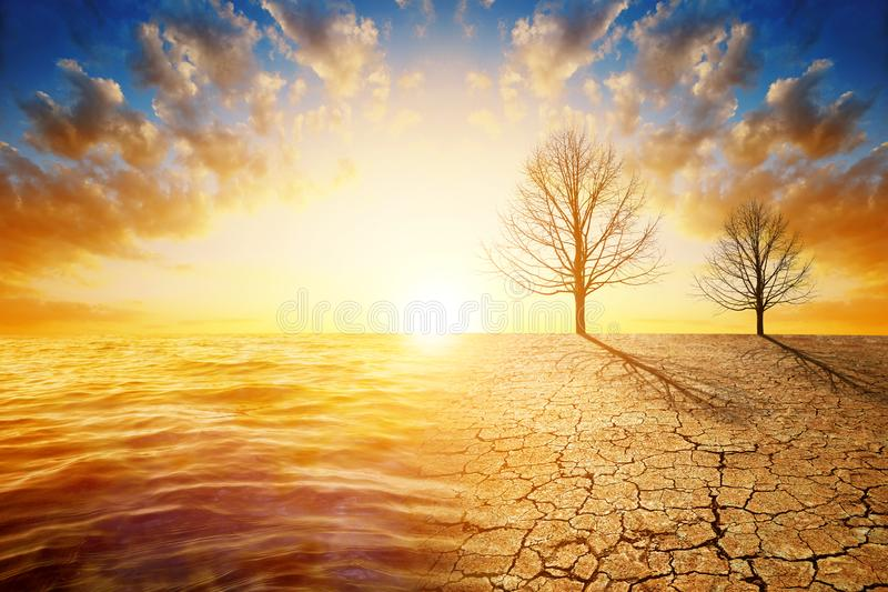 Dead trees in dry country with cracked soil and sea in the sunset. Concept of change climate or global warming royalty free stock image
