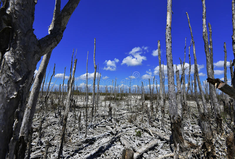 Dead trees, global warming stock photo