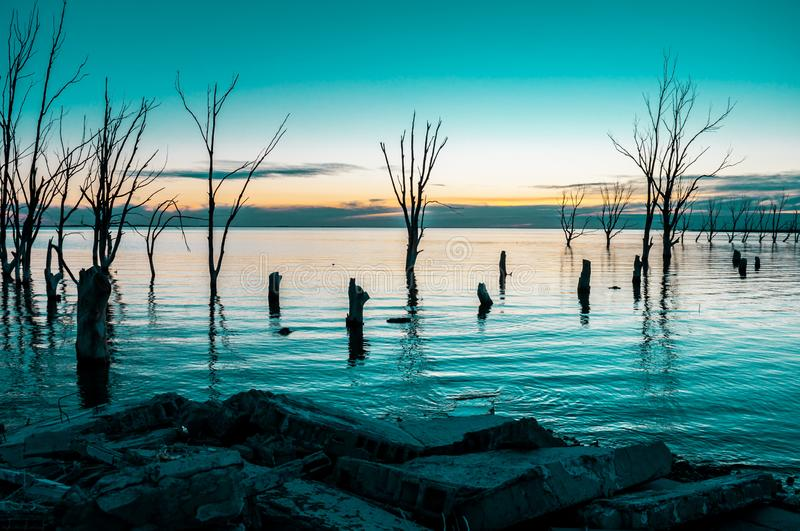 Dead trees inside a lake royalty free stock photo