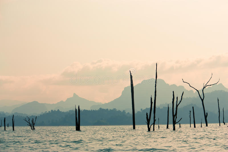 Dead trees in the lake stock photos