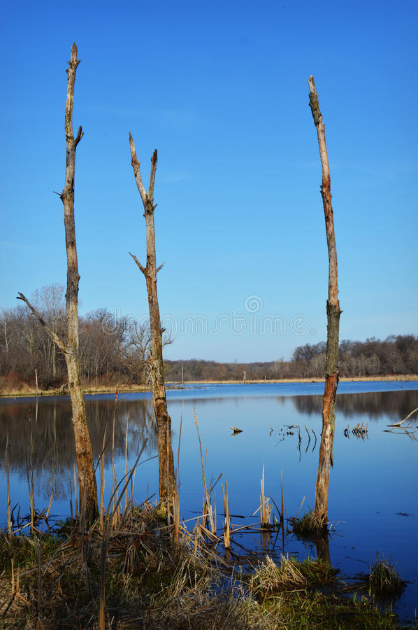 Dead Trees in Lake stock images