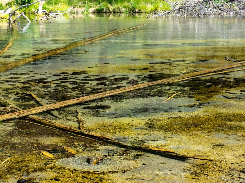 Logs in shallow clear water royalty free stock images